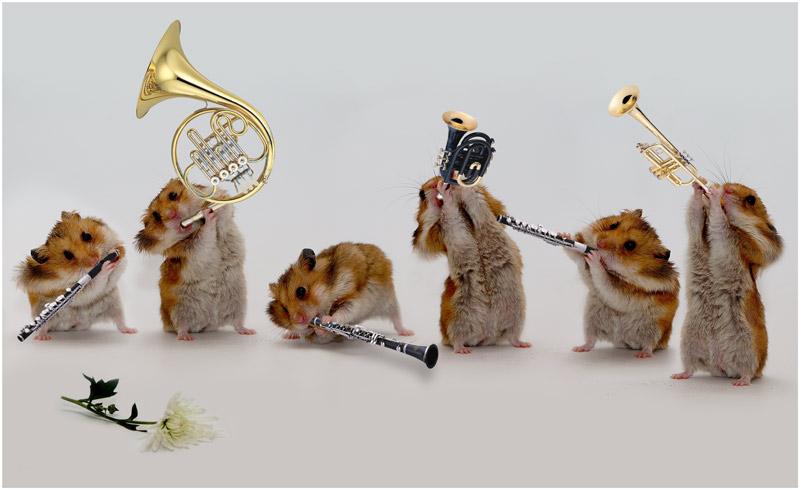 Поздравление животные с днем рождения